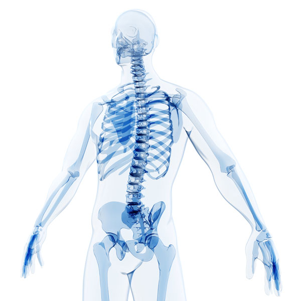 Extend joints to align bones in the correct position